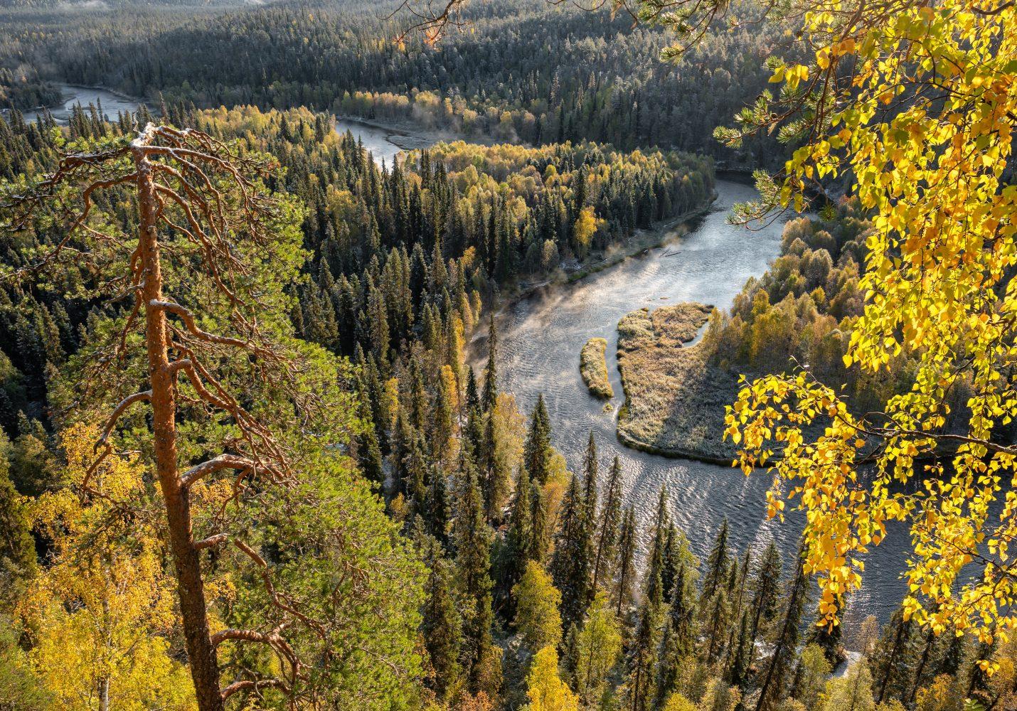 Metsäjajoki
